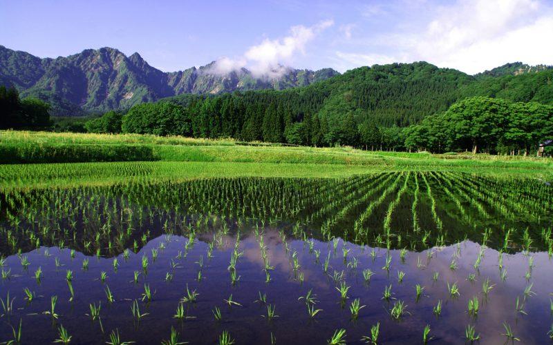 IMGP5332 800x500 - 新潟県湯沢町の絶景写真〜滝ノ又地区〜