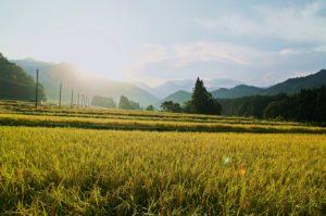 IMGP8396 300x199 - 湯沢町では特別天然記念物のカモシカが沢山いる?