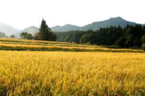 IMGP8398 300x199 - 湯沢町では特別天然記念物のカモシカが沢山いる?