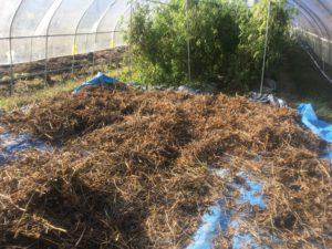 IMG 5290 300x225 - 湯沢町滝の又農産の大豆