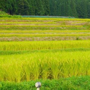 cropped cropped cropped P1000887 300x300 - cropped-cropped-cropped-P1000887.jpg