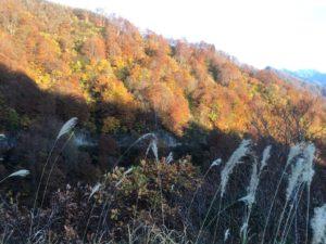 img 5092 300x225 - 湯沢町の超ローカルな紅葉名所を紹介