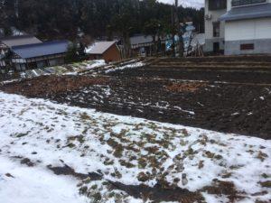 img 5907 300x225 - 雪が降っていてもトンボは生きてる?