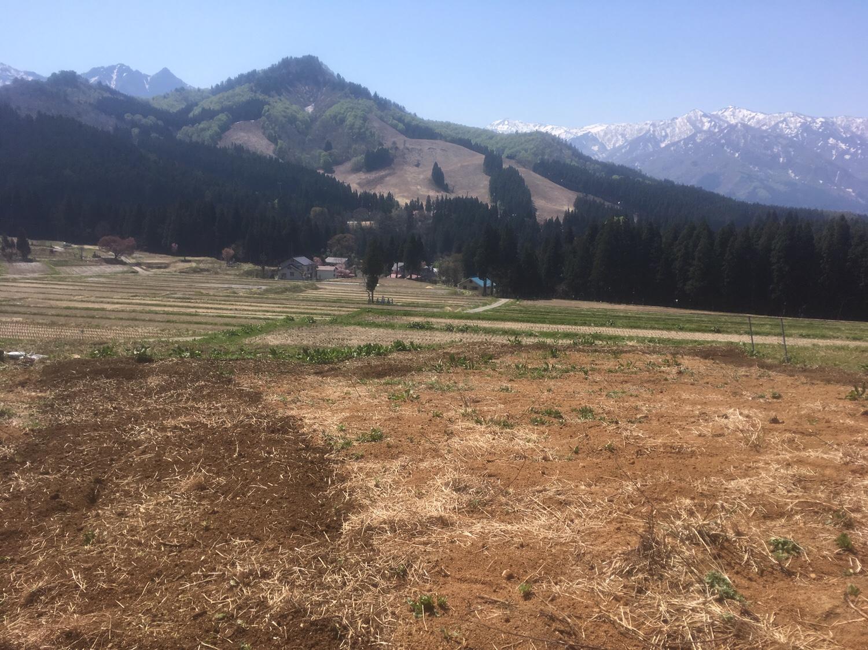 img 7360 - 耕作放棄地を元どおりにするのは困難?