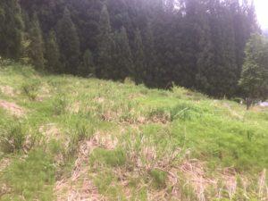 img 7505 300x225 - 耕作放棄地の開拓に失敗?