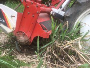 img 7507 300x225 - 耕作放棄地の開拓に失敗?