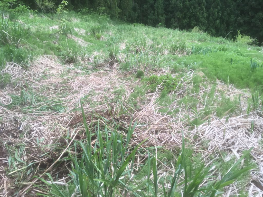 耕作放棄地の開拓に失敗?
