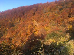 img 0858 300x225 - 湯沢町で絶景の紅葉刈り