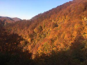 img 0861 300x225 - 湯沢町で絶景の紅葉刈り