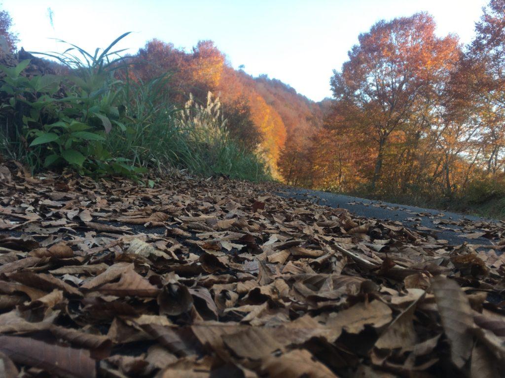 湯沢町で絶景の紅葉刈り