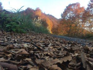 img 0872 300x225 - 湯沢町で絶景の紅葉刈り