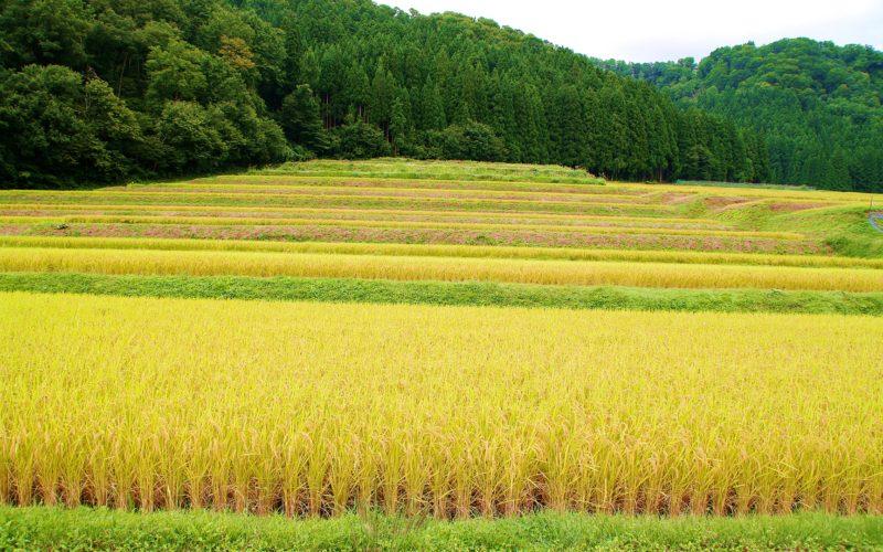 IMGP8244 800x500 - 新潟県湯沢町の絶景写真〜滝ノ又地区〜
