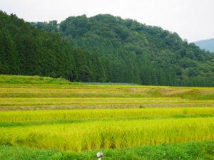 P1000887 300x225 - 湯沢町の棚田