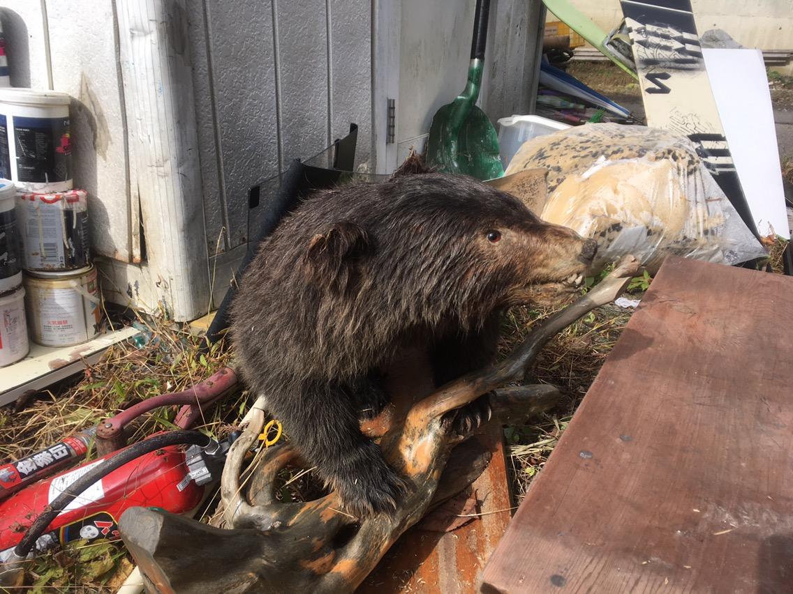 湯沢町でクマを発見