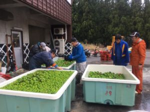 img 5156 1 300x225 - 湯沢の農作業