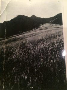 img 5600 225x300 - 夏の岩原スキー場