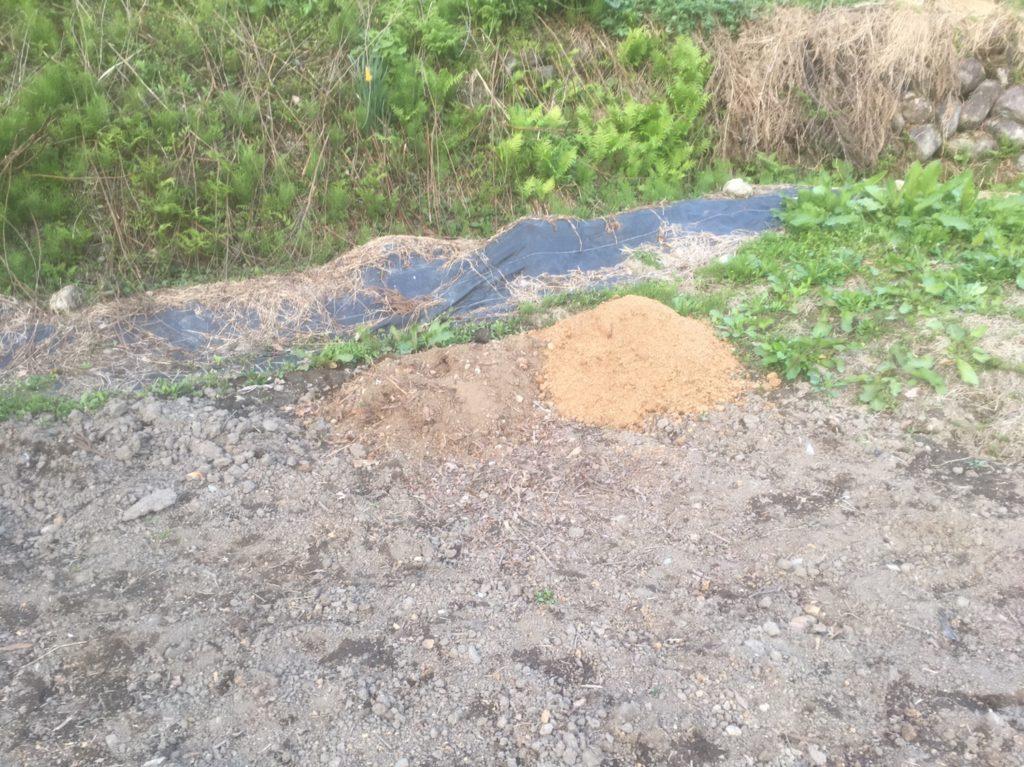 カブトムシのいる土を目指して
