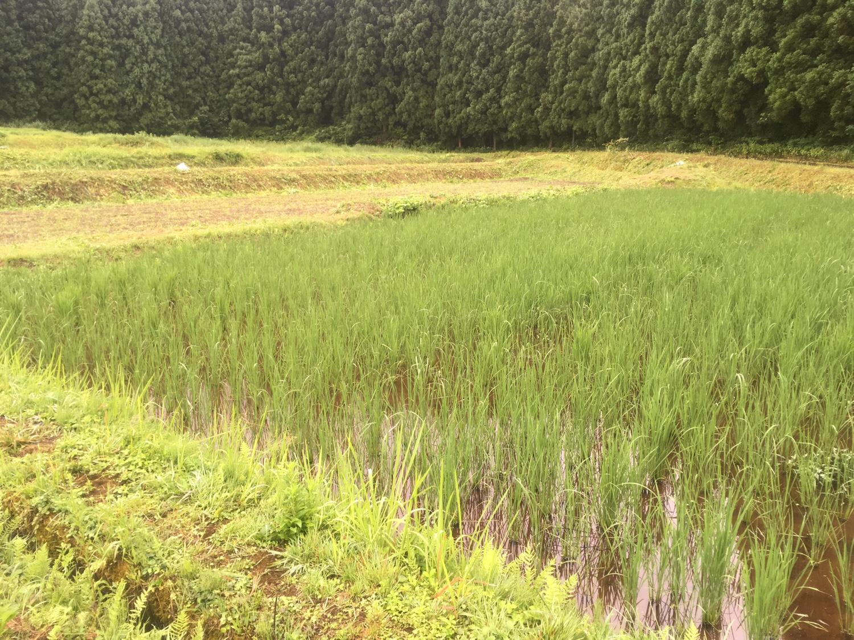 img 8986 - 自然農法の苗は?