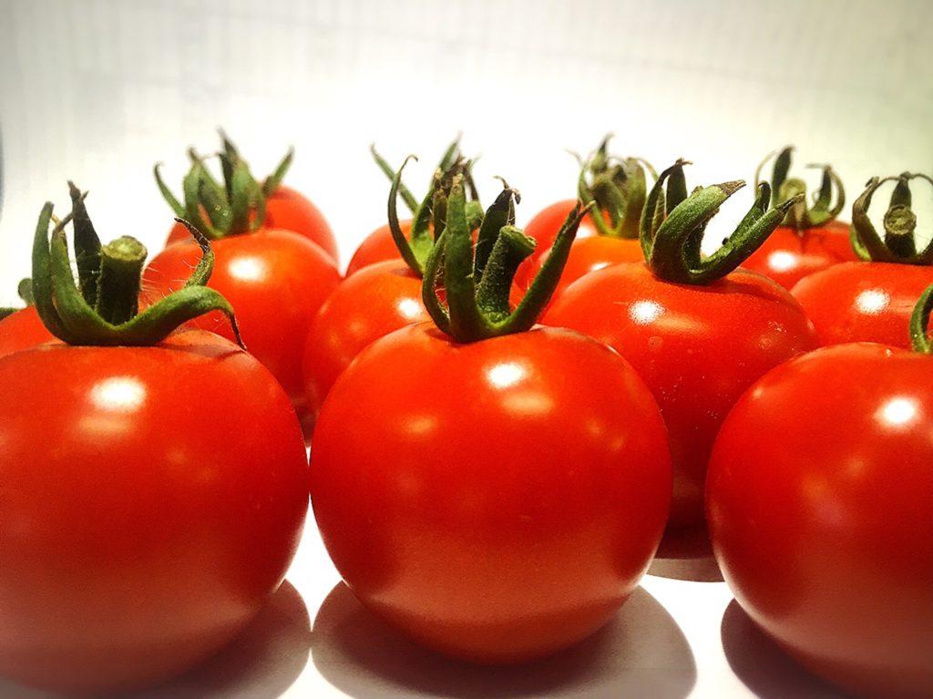 湯沢町deトマト摘み採り体験〜滝の又農産〜