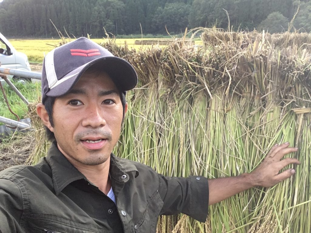We'll going to harvest rice at october 21